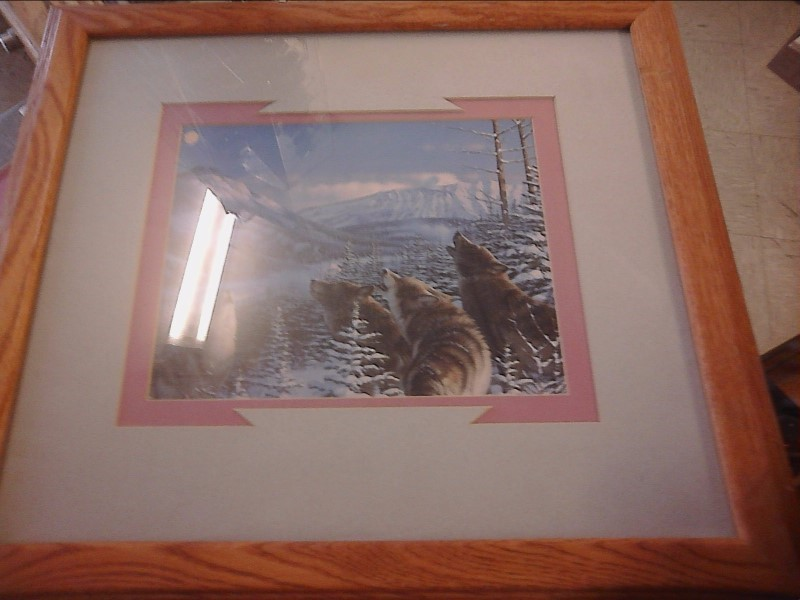 Four howling wolves in light grey and pink matt with wood frame