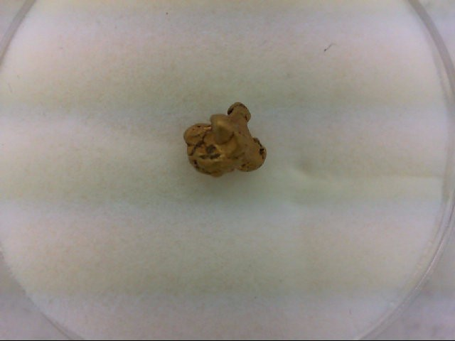 natural placer gold nugget 0.7g