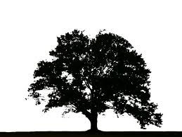 TREE BRAND
