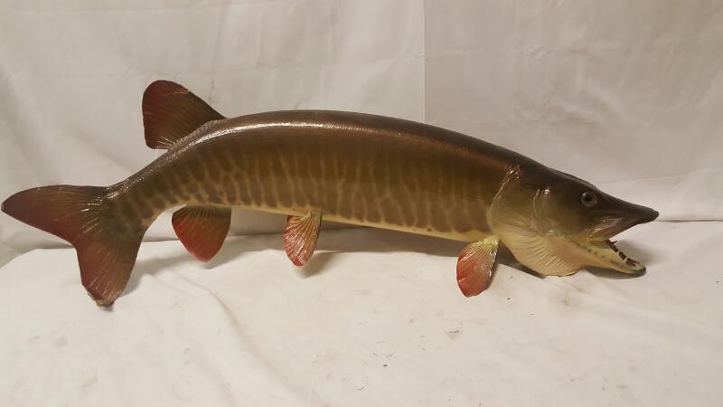 Sculpture/Carving FISH TAXIDERMY