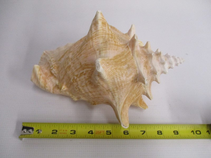"LARGE PINK CONCH SHELL 9"" NAUTICAL BEACH DECOR"