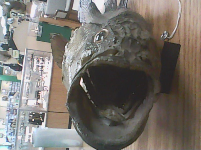 Collectible Plate/Figurine FISH TAXIDERMY