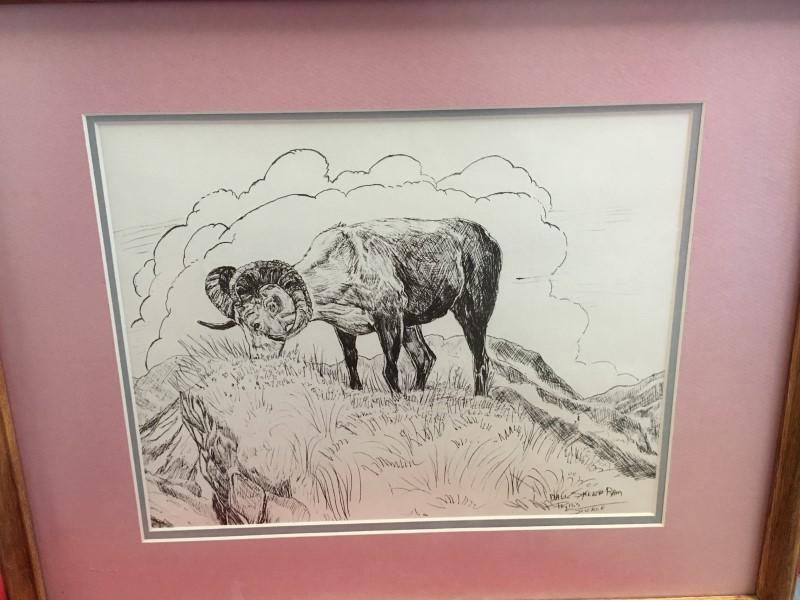 DAHL SHEEP RAM BY PHYLLIS STICKLE