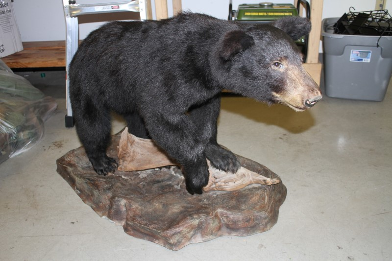 "BEAR CREEK ARSENAL ""One of a kind"" CUB MOUNT BEAR CUB MOUNT"